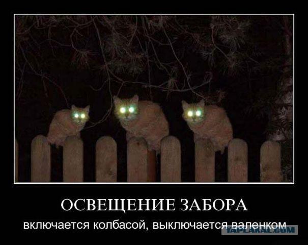 http://s00.yaplakal.com/pics/pics_original/0/0/2/2954200.jpg
