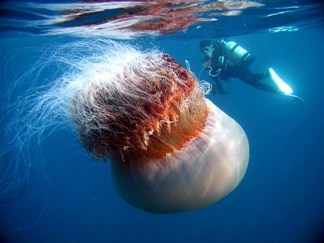 Фото самой большой ореолы 23 фотография