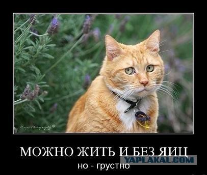 Кастрации кота с фото