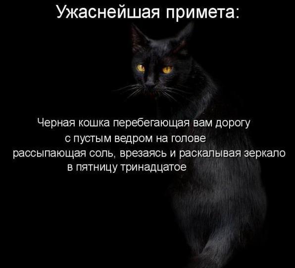 узнать транспортный черная кошка обошла вокруг примета творога