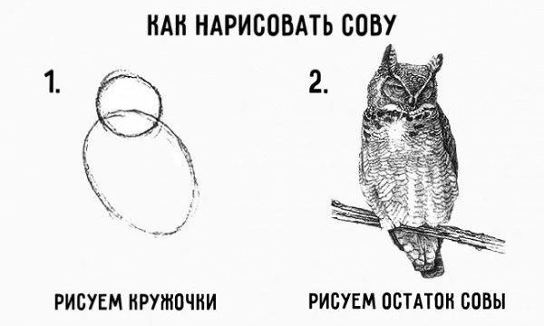 """Очередная инструкция """"Как нарисовать сову"""""""