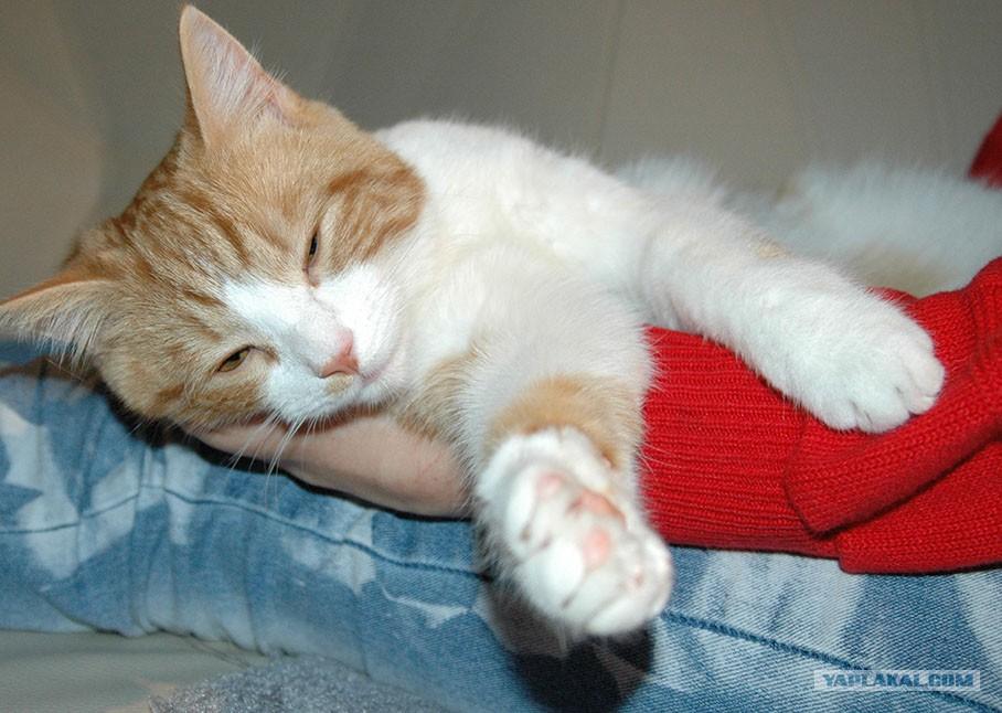 К чему снится подарок котенка 60