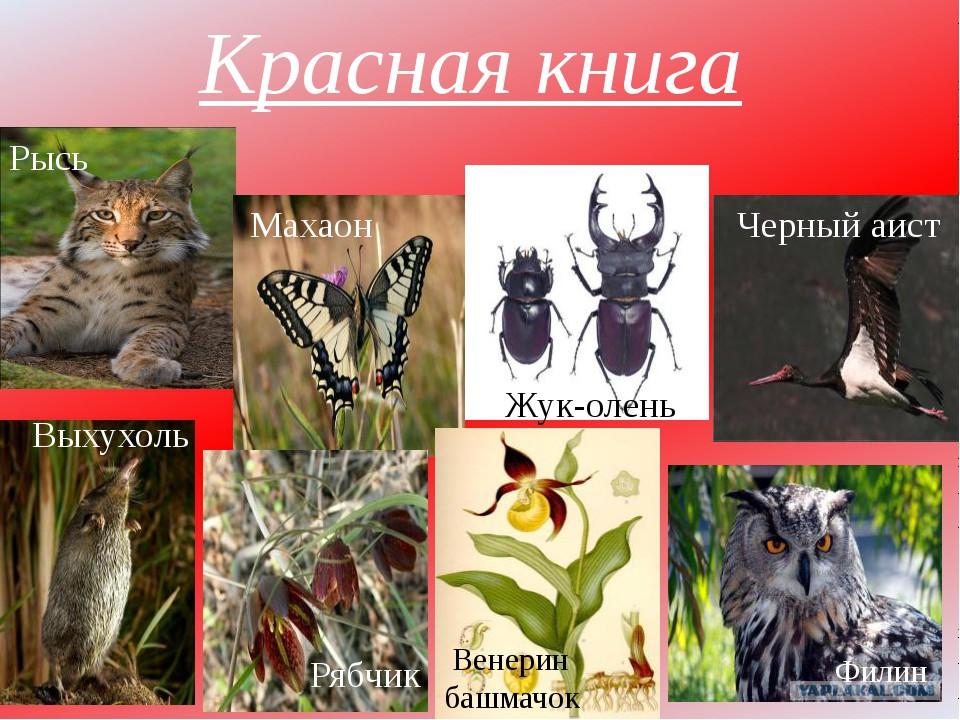 Реферат животный мир восточного казахстана А если заменить цвет реферат животный мир восточного казахстана бисера при плетении ящерки вот такой крабик и конечно плетение которого освоит даже