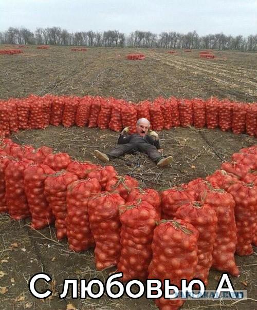 Бабы и картофан