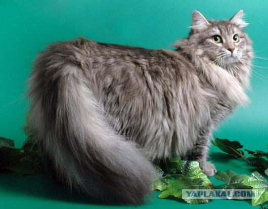 Фотки крутой кот - bd7