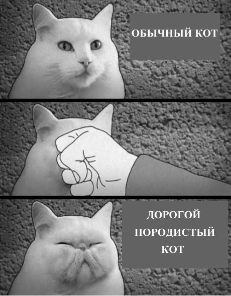 Разница в котах