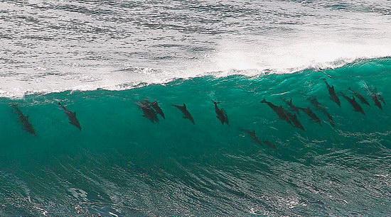 Дельфины - удивительные животные