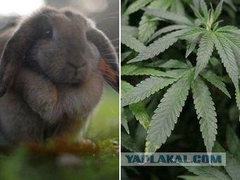 Пожилая немка выращивала кроликов на конопле