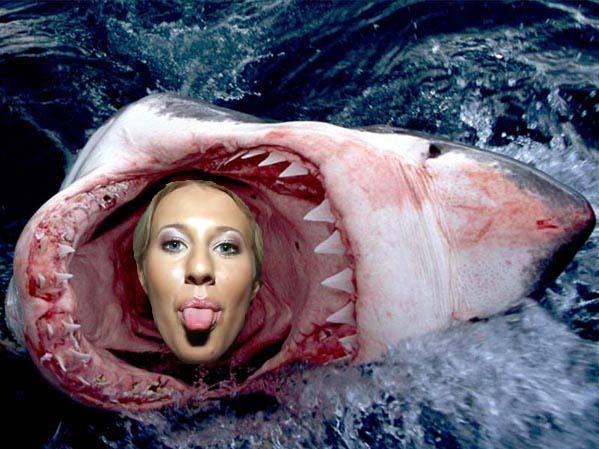 Новый вид акул появился на Мальдивах.  Гибрид Большой Белой и Ксюши...