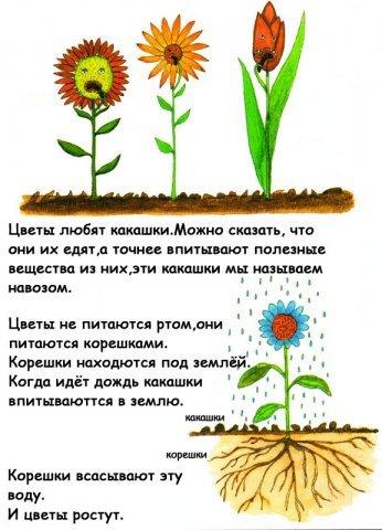 http://www.yaplakal.com/uploads/post-3-12358230856749.jpg