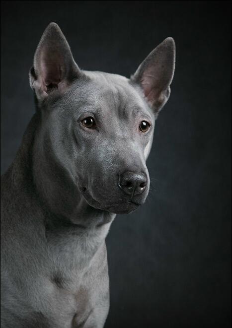 злых собак на аву