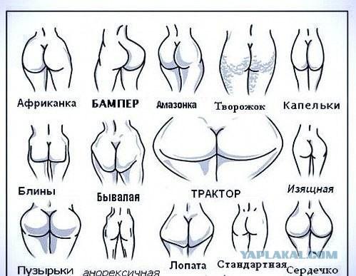Схематические рисунки женских попок и жопок. Классификация попок в картинк