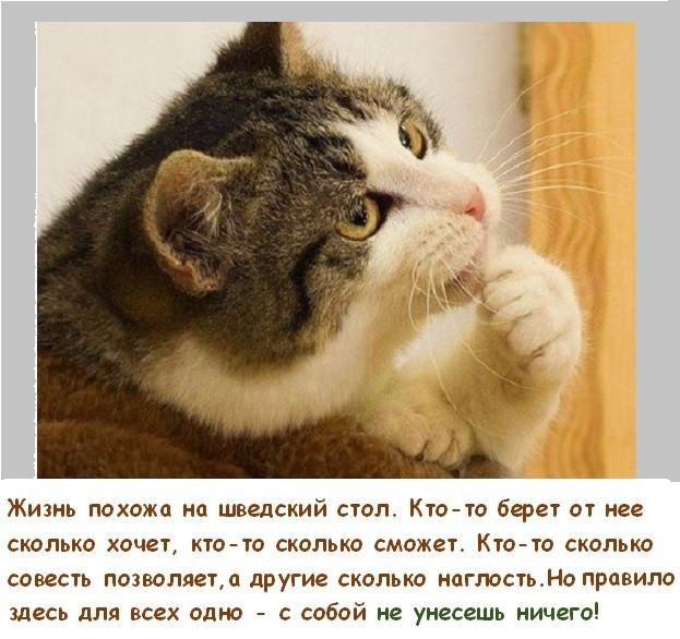 Фотки и картинки: юморные и красивые, забавные и милые 18.09.20