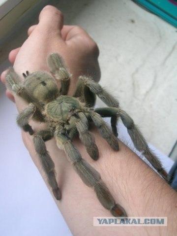 К чему ходит паук по мне