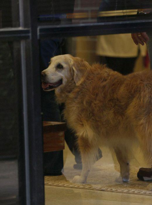 Спасатели прощаются с последней собакой, искавшей жертв теракта 11 сентября 2001 года