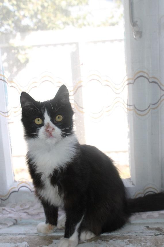 Котик в добрые и надежные руки!