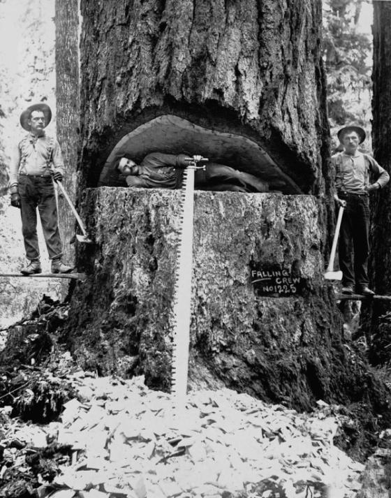 Американские лесорубы конца XIX - начала XX века