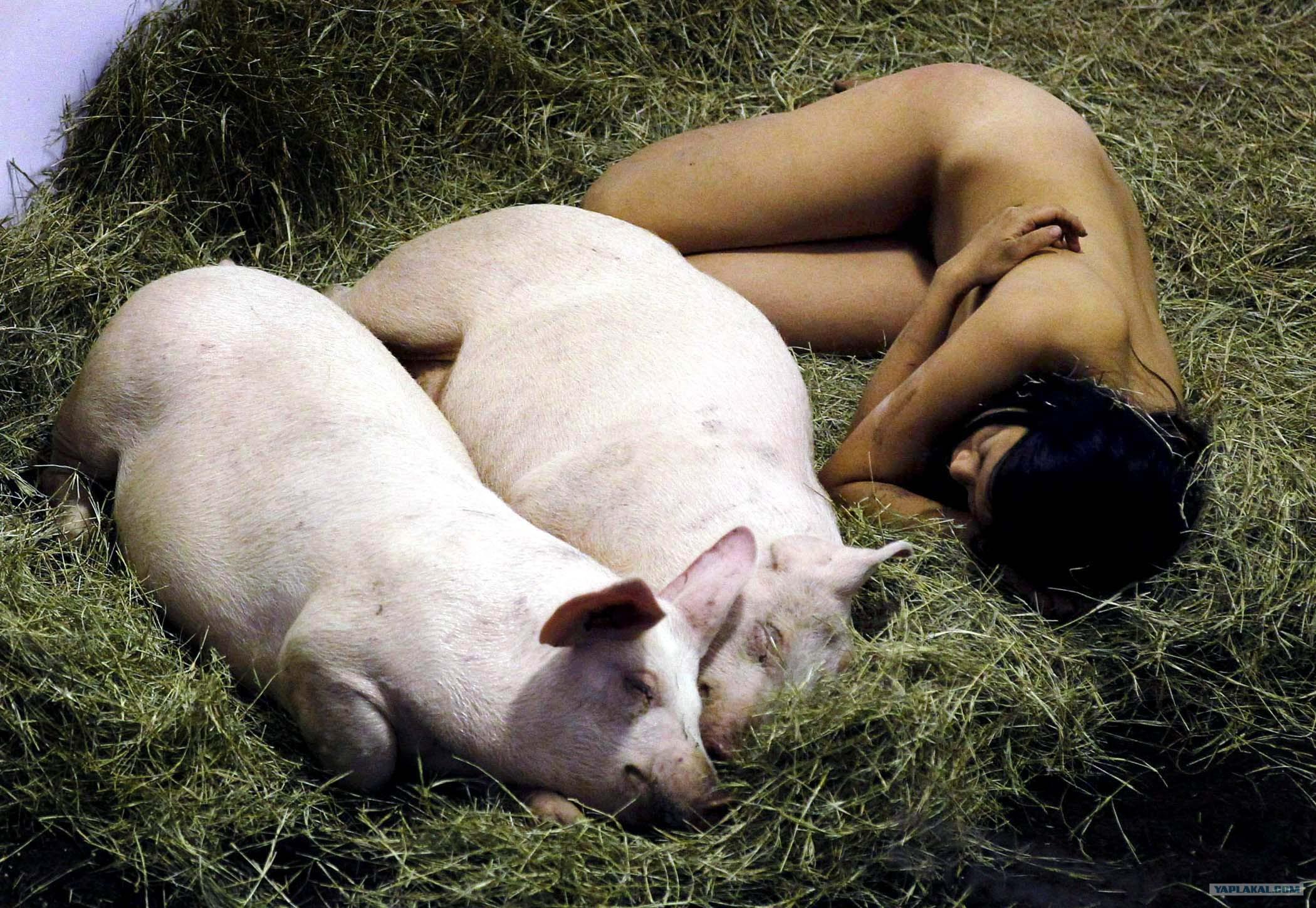 секс со свиньей фото