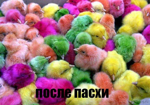 http://s00.yaplakal.com/pics/pics_original/0/6/4/11331460.jpg