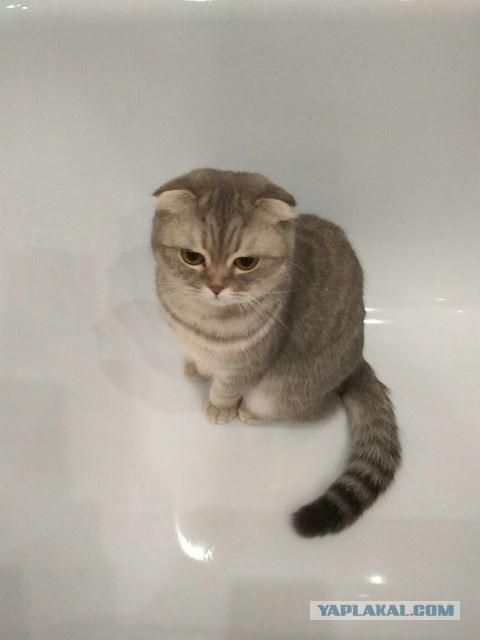 Ремонт ванной в новостройке