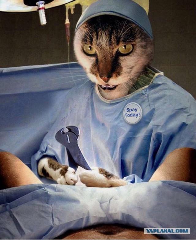 кот после кастрации боится хочешь толстеть