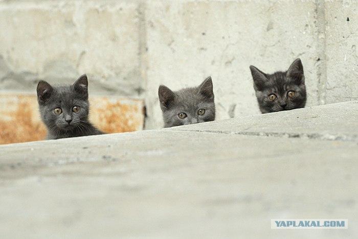 photo : Трое photographer : Огнев Владимир.