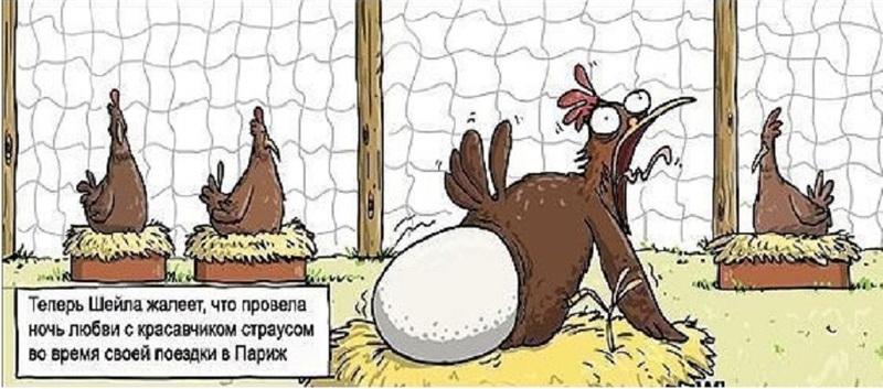Анекдот Про Квадратные Яйца