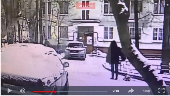 В Москве дерево упало на прохожих