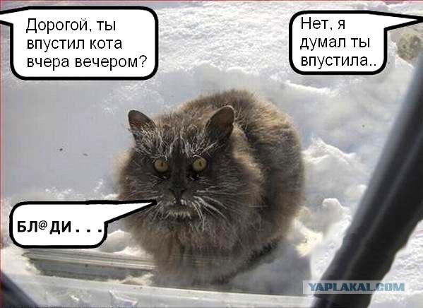 Котенок видит снег в первый раз