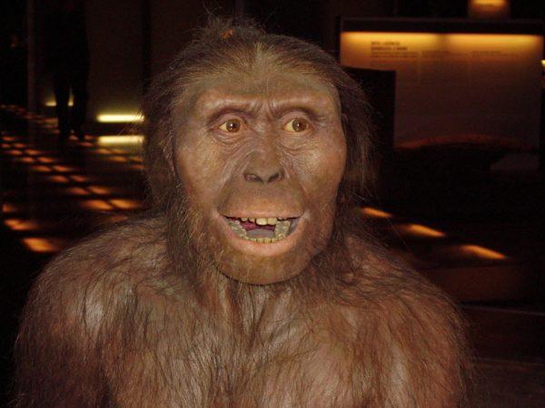 Неразрешённые загадки эволюции.