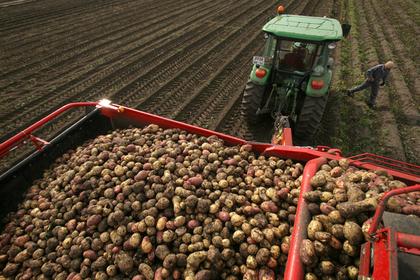 Россия запретила импорт картофеля с Украины