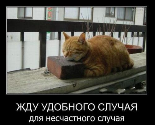http://s00.yaplakal.com/pics/pics_original/0/9/5/7221590.jpg