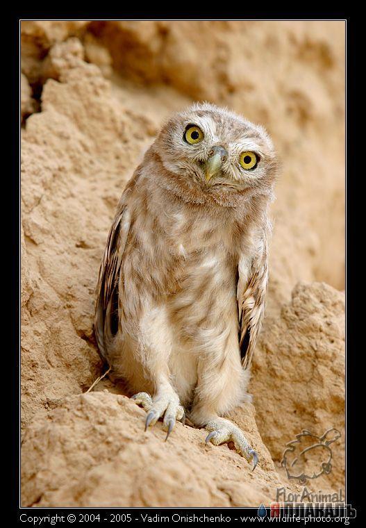 Фотографии животных :: Птицы фото 5.