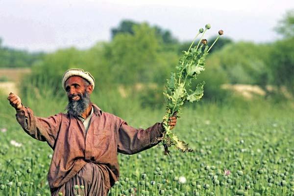Афганских маководов с новым урожаем!