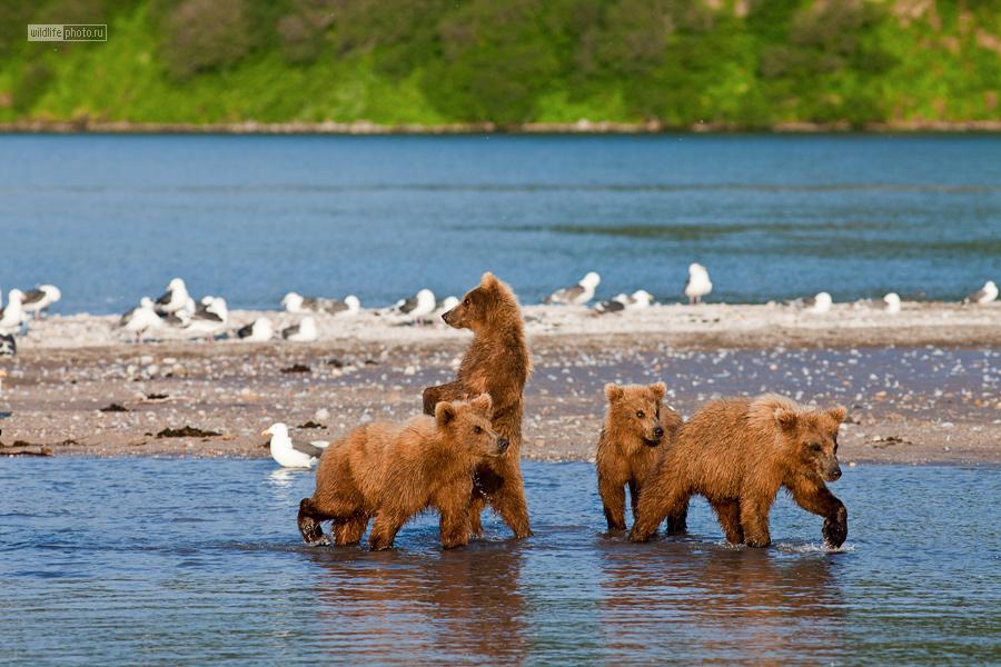 Скинхеды с Курильского озера