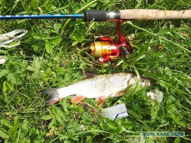 ловя рыб на майских жуков