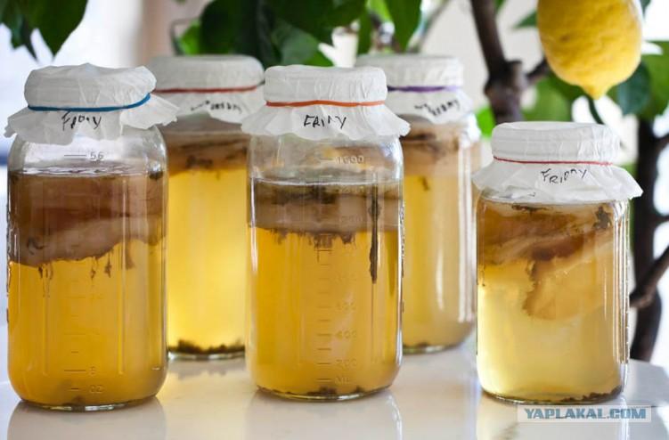 в забродившем яблочном соке есть грибок: