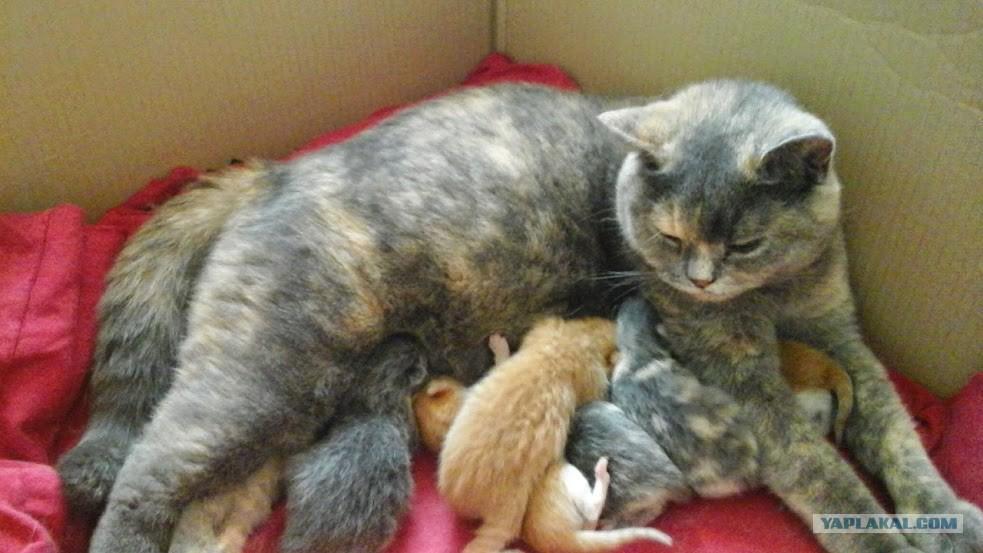 Во сне рожаю кошек или котят. Кому такое снилось с чем это