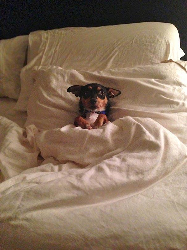 второго во сне прятаться от собаки троллейбуса Метро