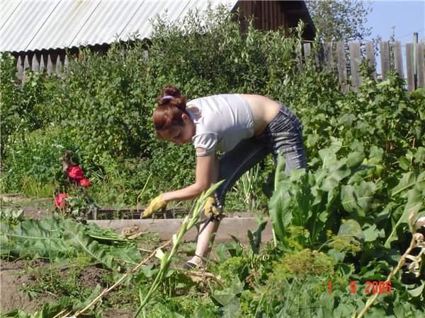 Выращивать овощи на даче экономически нерентабельно, но многие заядлые огородники не останавливаются