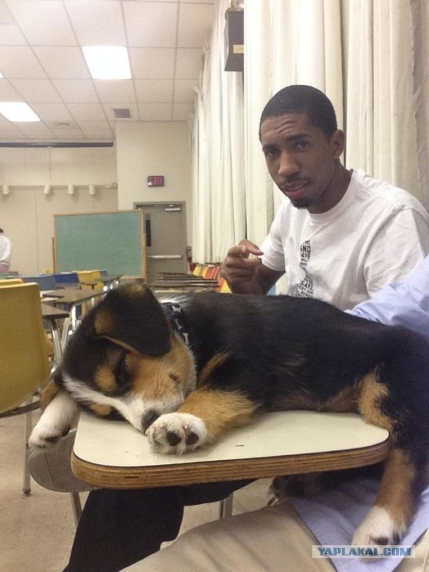 21 собака, которая спит, где ей вздумается, и ей наплевать на ваше мнение