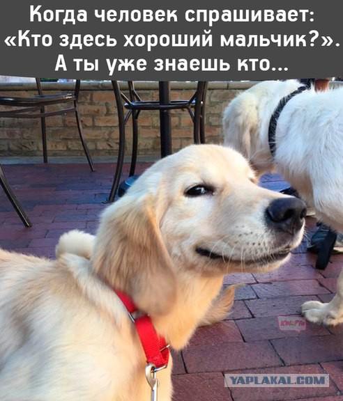 Немного смешных картинок для настроения. 16