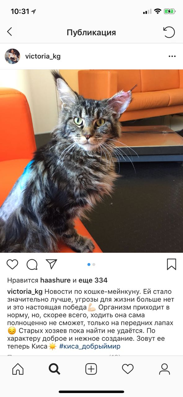 Нужна помощь в поиске хозяев кошки мейн-кун