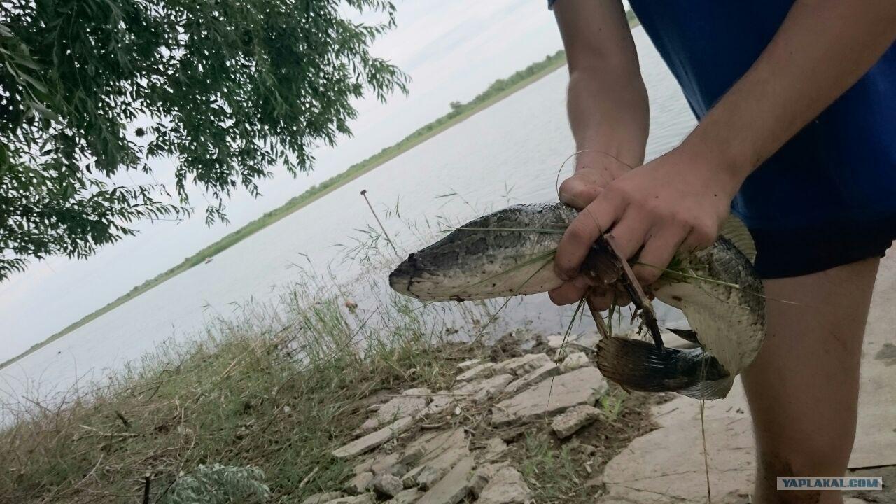 плата за рыбалку на озернинском водохранилище