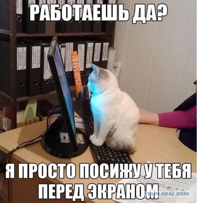 Уличный кот зашел в гости в прямом эфире