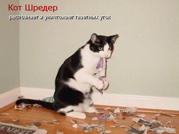 Почтальон постоянно жаловался хозяевам на их кота