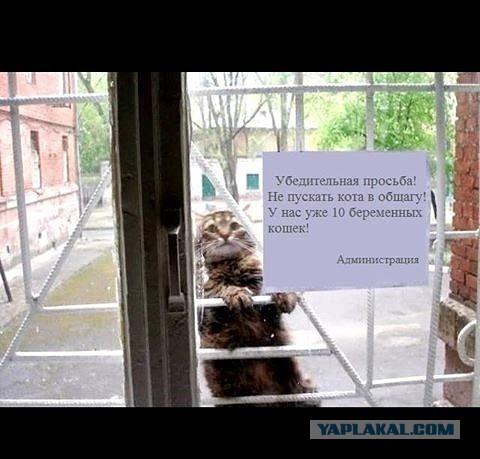 Реакция кошки на смену окна