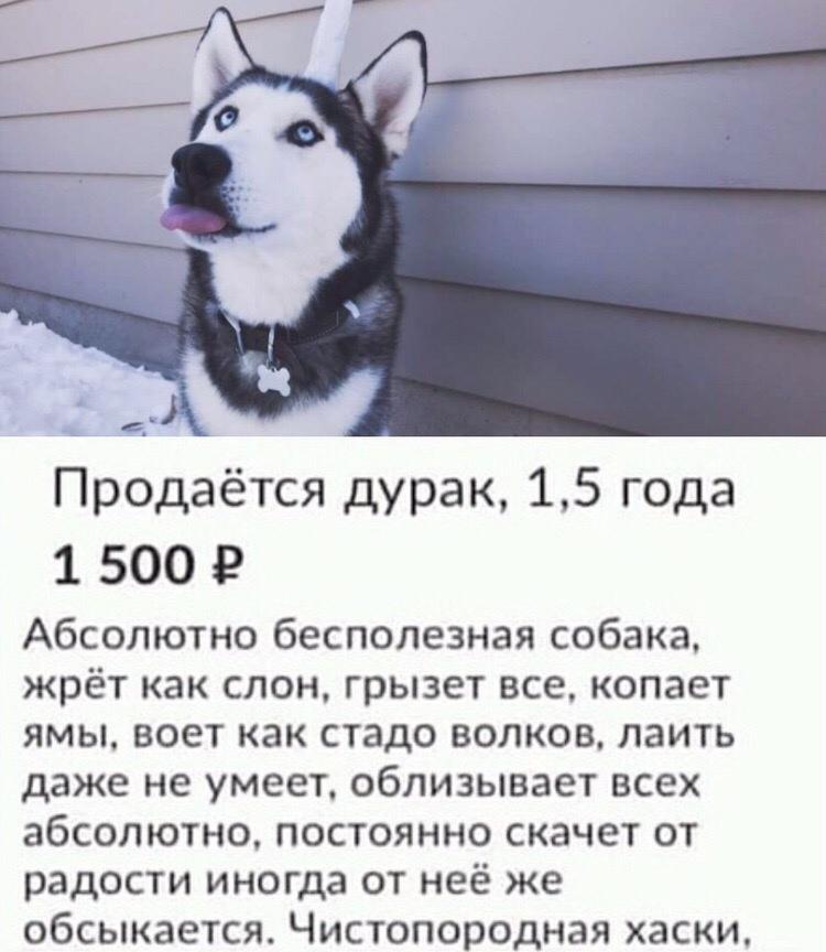 http://s00.yaplakal.com/pics/pics_original/1/2/1/13050121.jpg