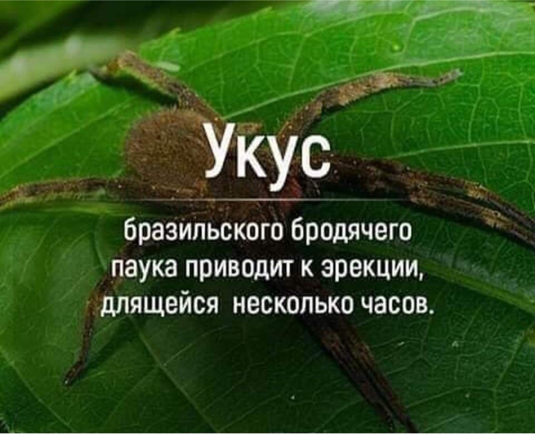 http://s00.yaplakal.com/pics/pics_original/1/2/3/13895321.jpg