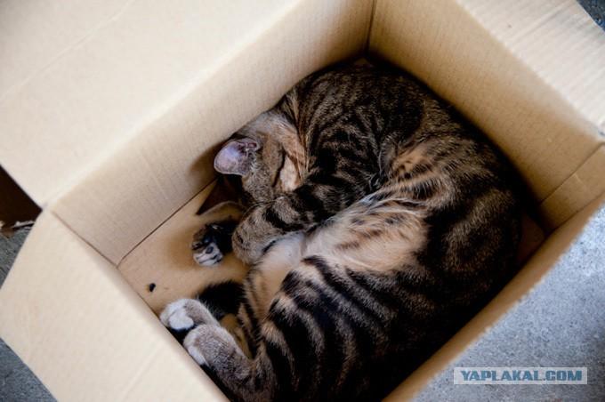 почему у кошки плохо пахнет изо рта